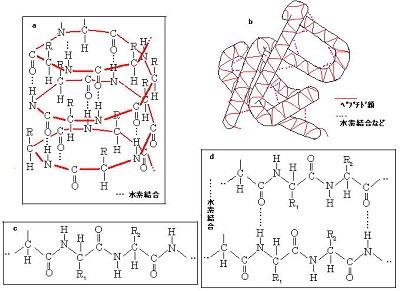 タンパク質の1、2、3、4次構造